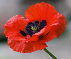 Remenbrance Day (2)