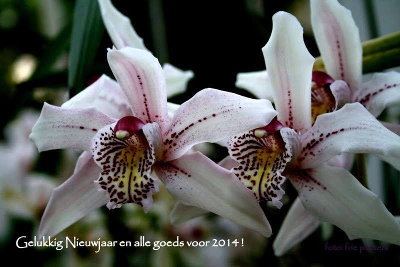 Orchideeën -+ Nationale Plantentuin - Meise