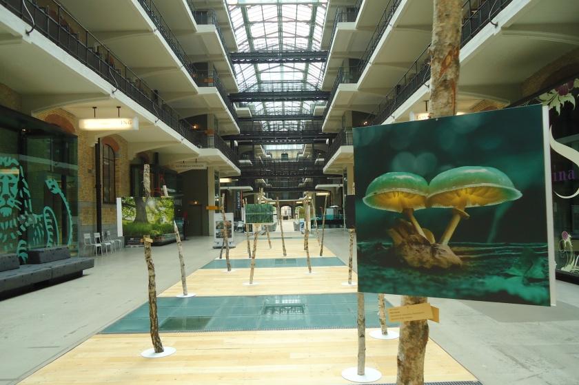 PEFC - foTowedstrijd - tentoonstelling Thurn & Taxis